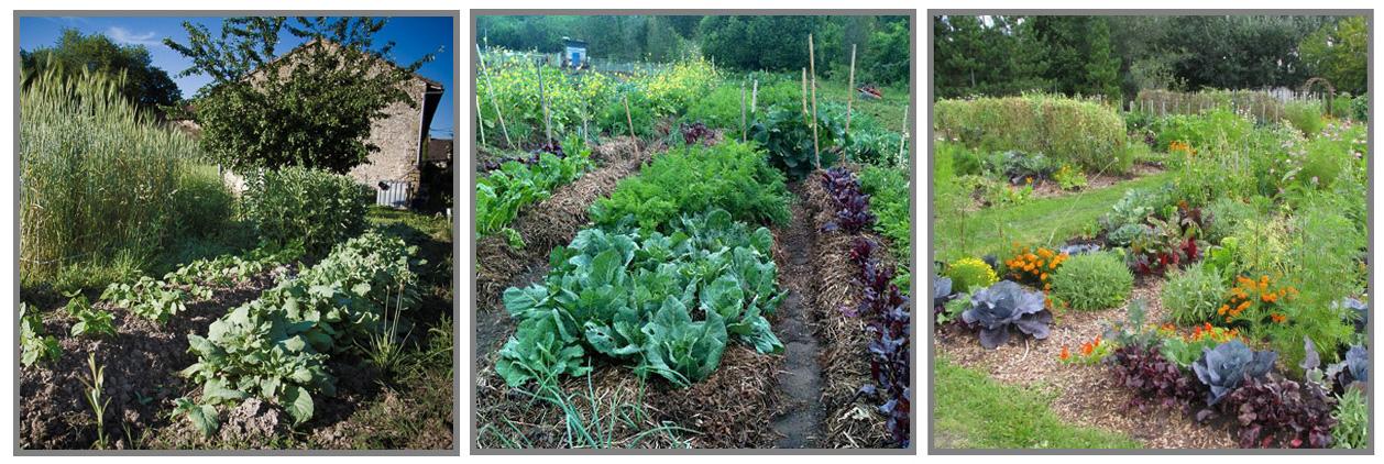 Buttes auto-fertiles cultivés par des jardiniers amateurs.