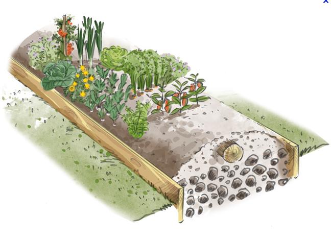 La matière organique incorporée dans la butte, le paillage permanent en surface de la butte et la plantation d'engrais verts permettent d'obtenir un sol vivant, riche et fertile sur le long terme.